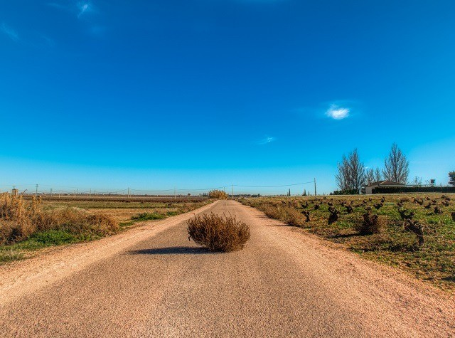 deserted road with tumbleweed